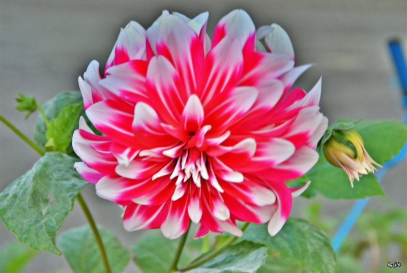 A Flower Just 4U
