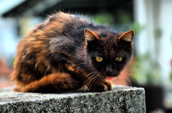 The Homeless (abandoned) Cat