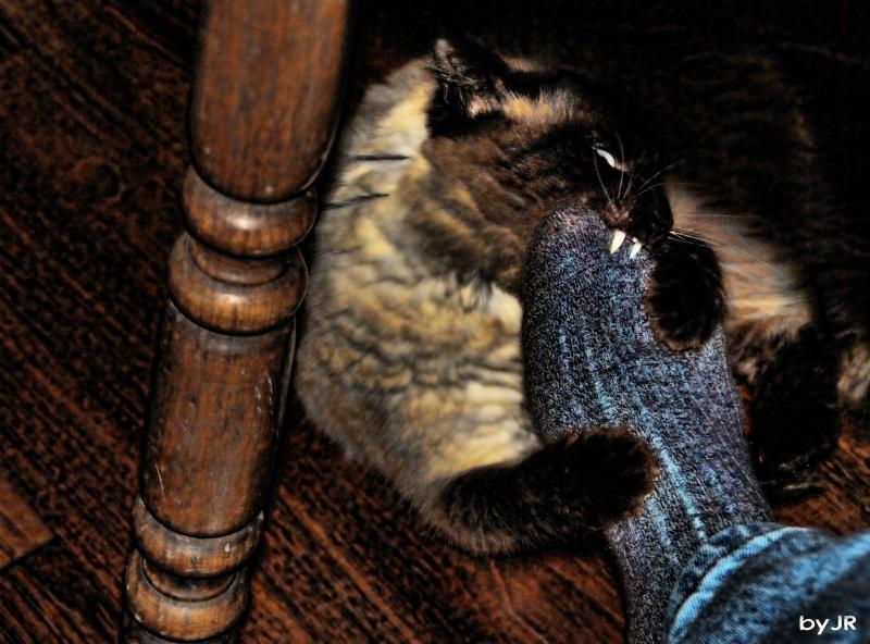 Vampire cat attacks foot.