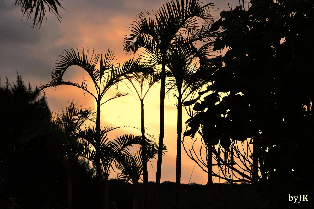 Morning breaks through the palms.
