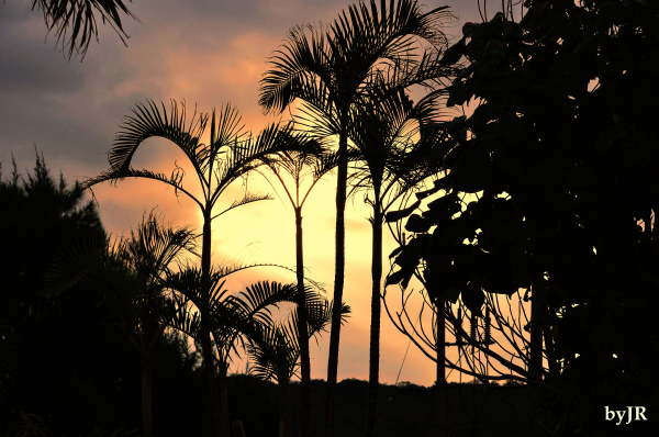 Morning breaks through the palms.