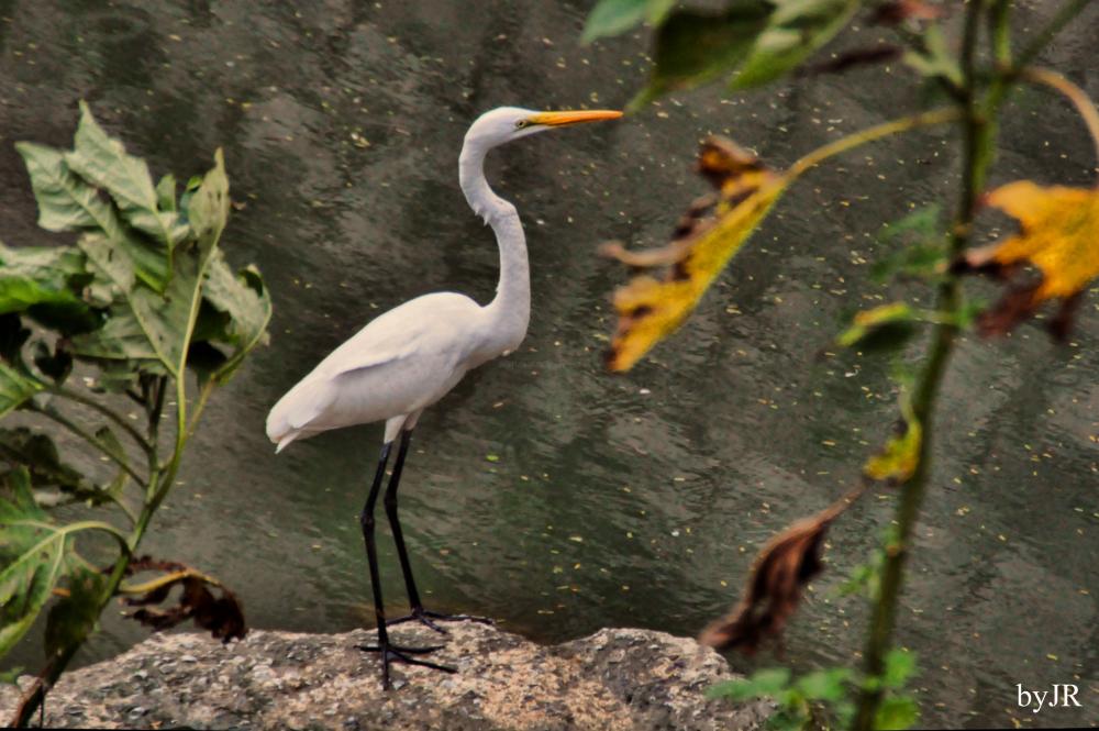 Beautiful bird waiting for a fish.