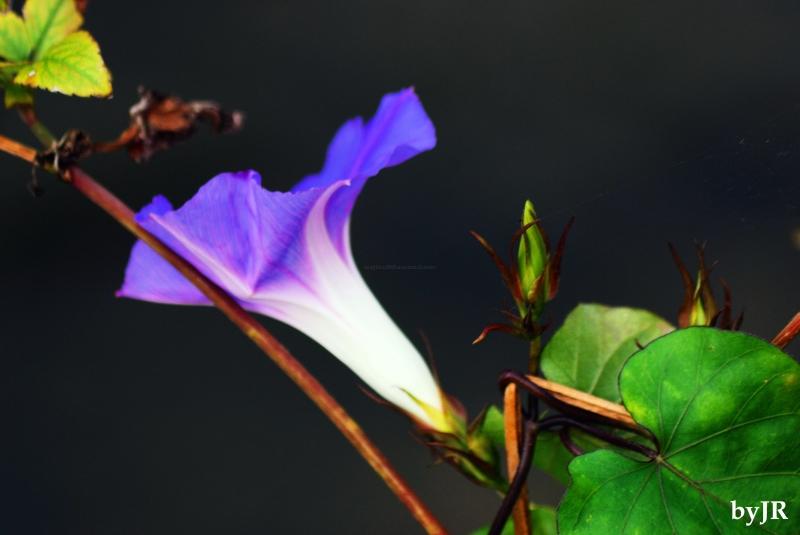 Beautiful flower growing wild.