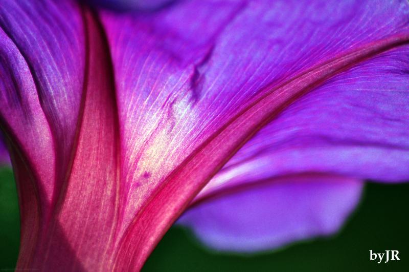 royal colors plant nature photos j r s okinawa champuru