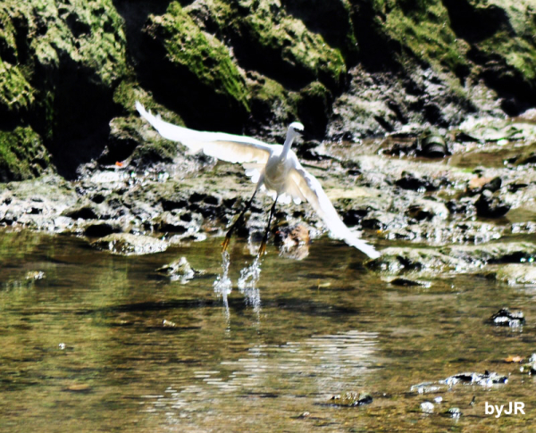 Another egret picture.