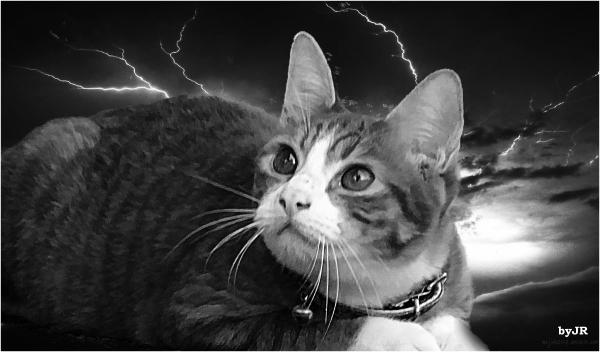 A little kitten in a storm.
