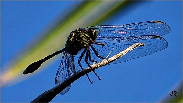 Dragonflies like a rest sometimes.