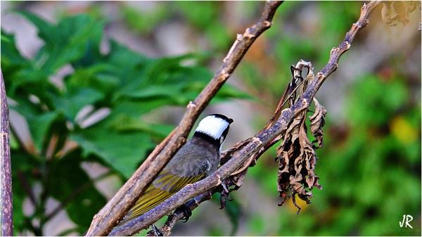 Bird on a tree limb.