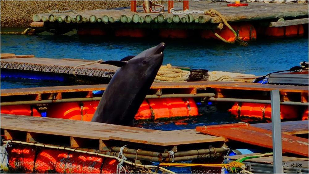 First the splash, but wait here's the dolphin.