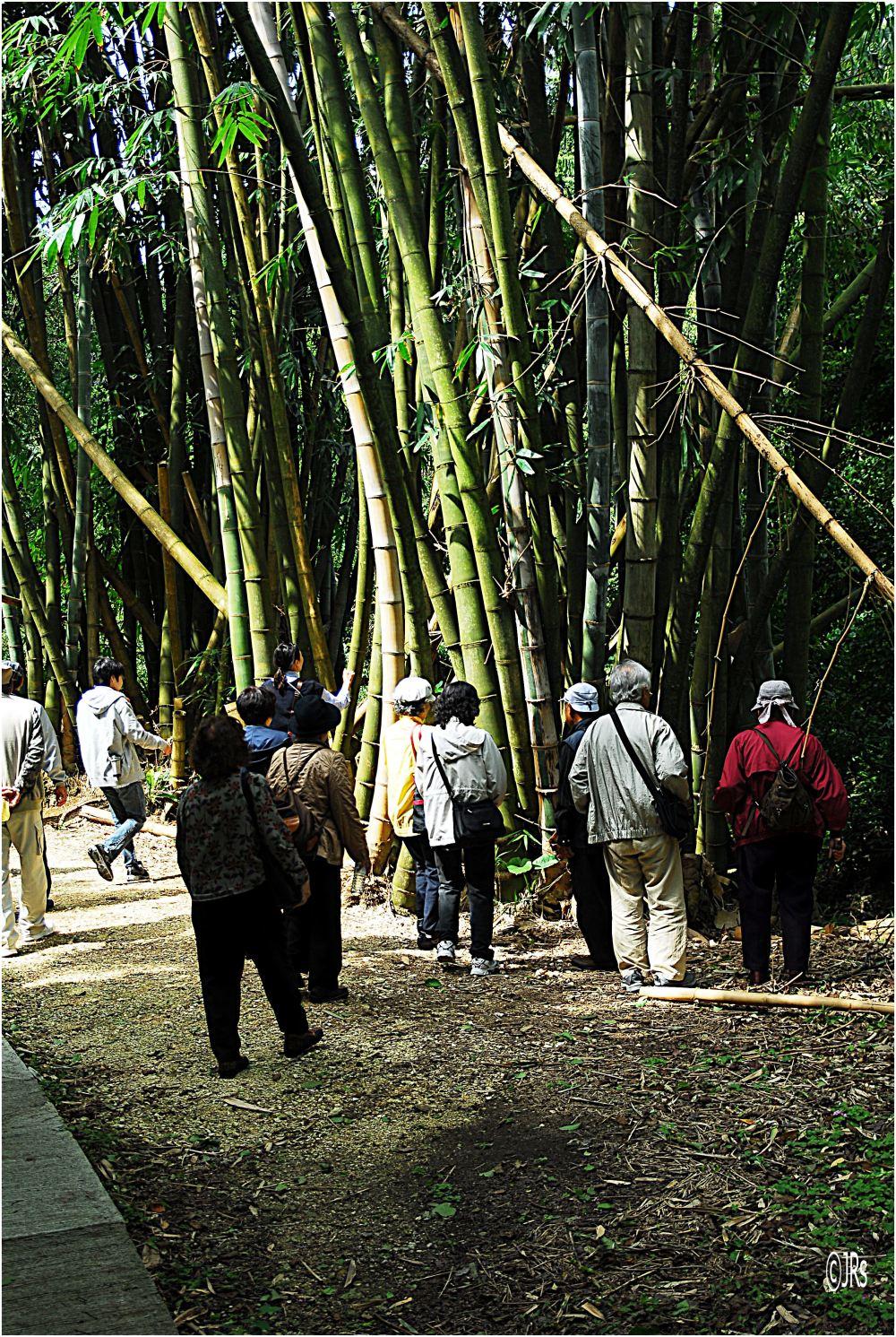A few bamboo plants.