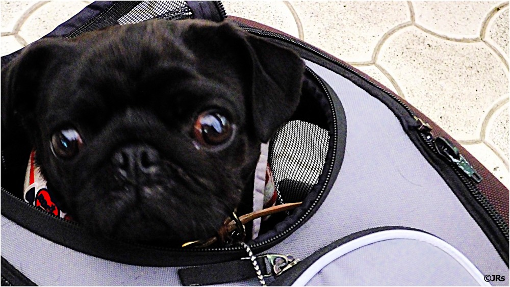 OH! What big eyes you have.
