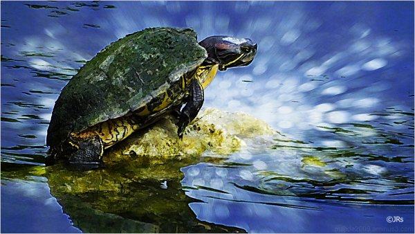 Extreme turtle shot:)