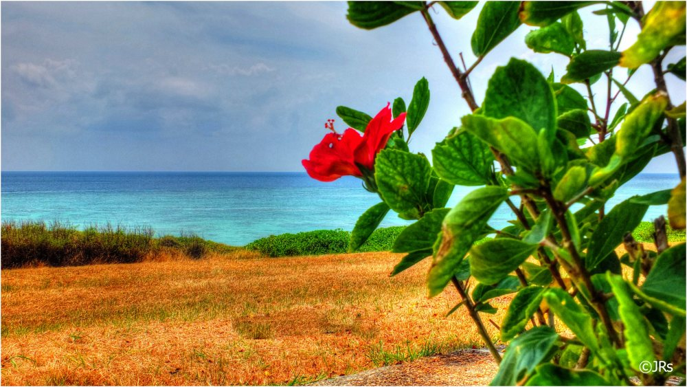Hibiscus by the sea.