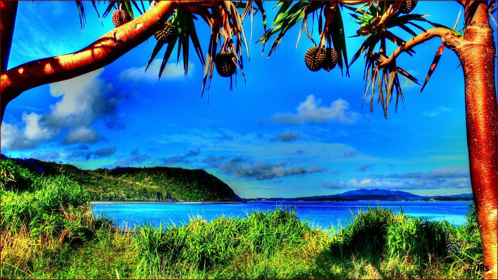 Seascape through the trees:)