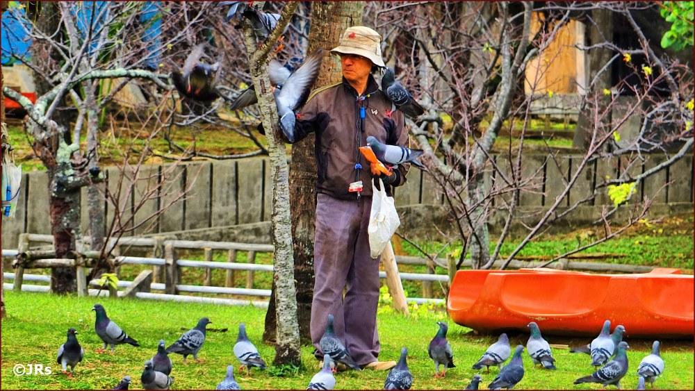 The pigeon man of Yogi Park.