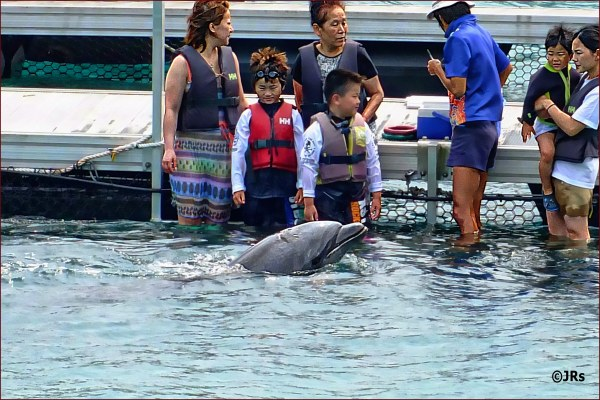 Fun with the dolphin.