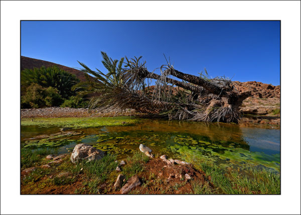 oasis du sud