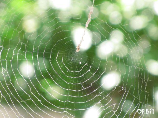 SPIDER'S WEB!!!