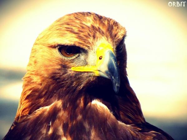 bird eagle look powerful
