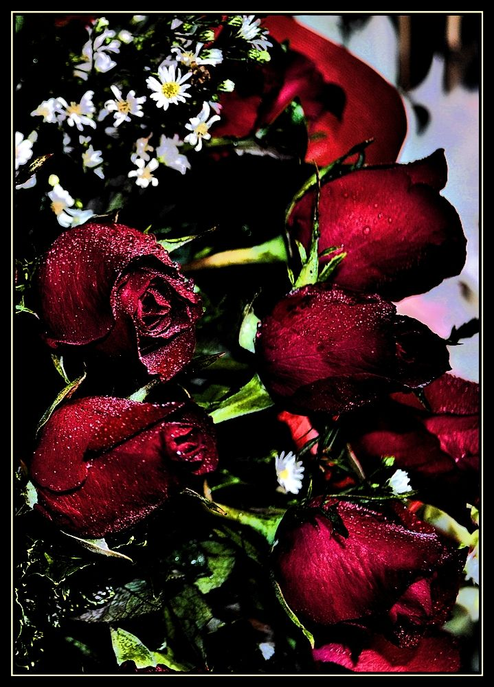 Roses in the dark 2