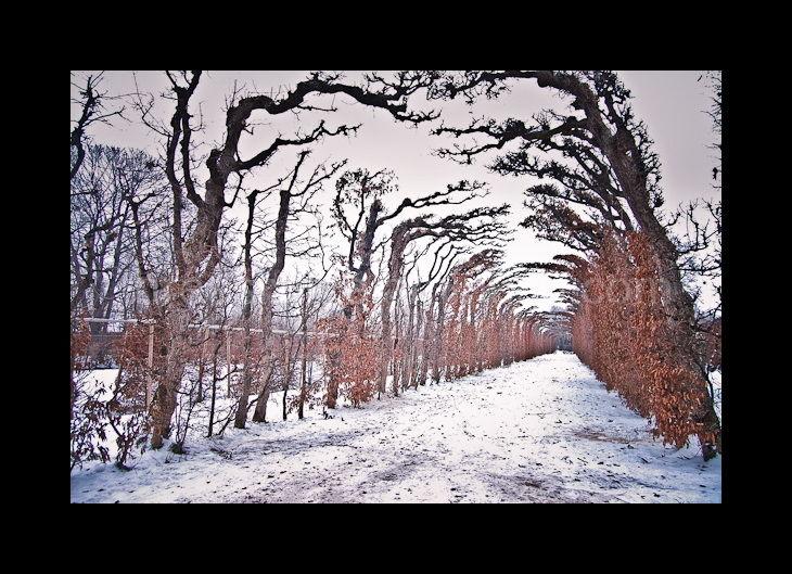 hedges at schloss schönbrunn in winter