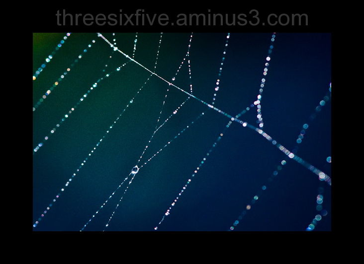 Water on spider web