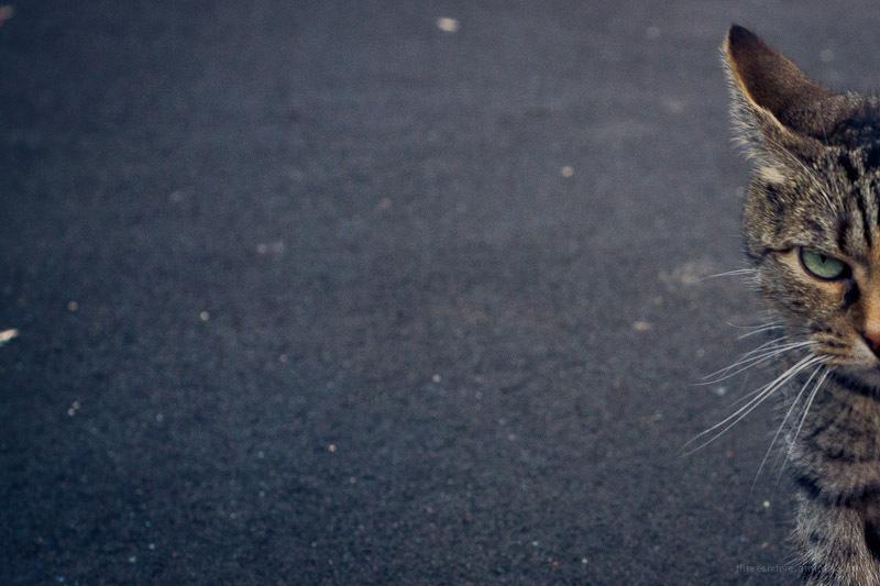 unimpressed cat in street