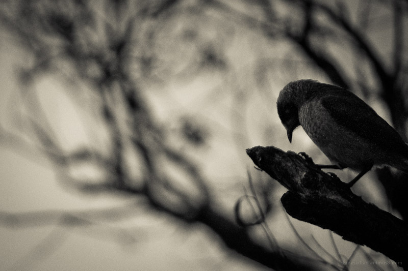silhouette of bird and branches