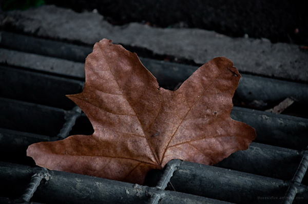 leaf stuck in the gutter