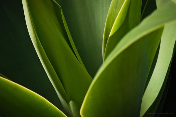 Leaf Layer
