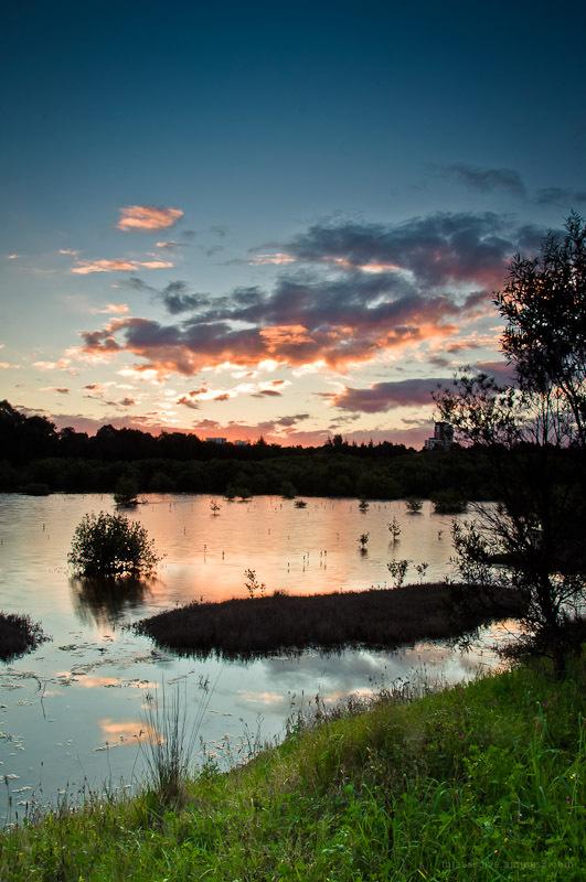 Mason Wetlands