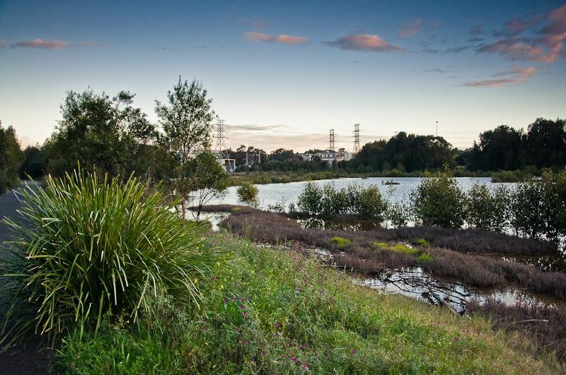 Mason Park Wetlands