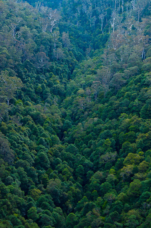 Forest from above from Queen Victoria Lookout