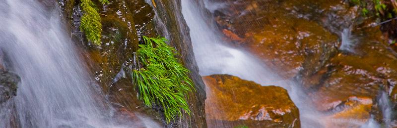 Waterfall Greenery
