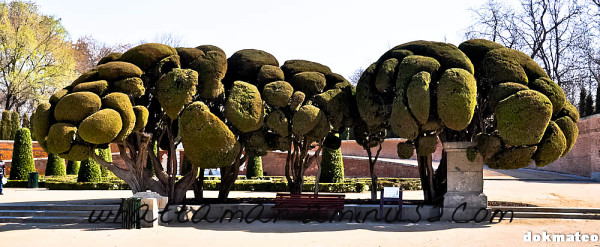 Broccoli Tree
