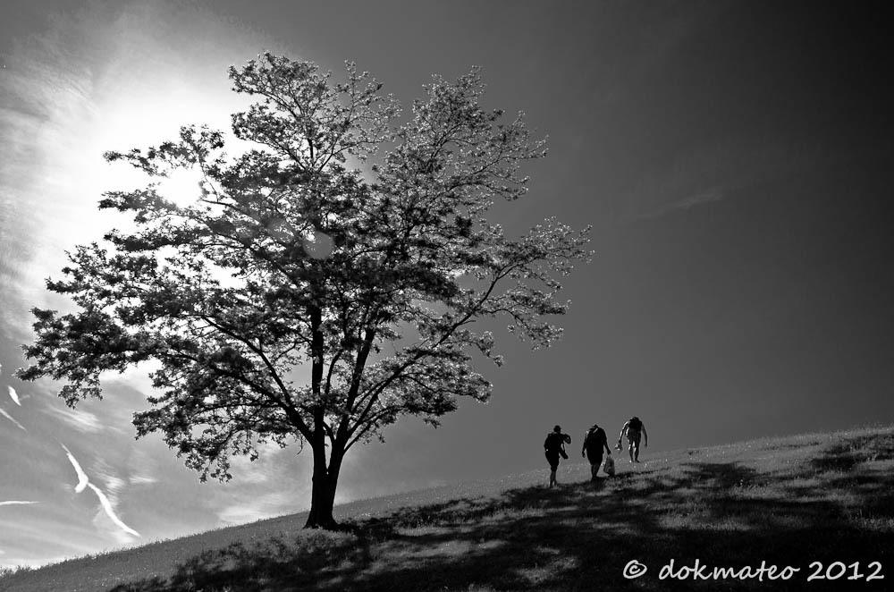 Three on Tree (Power of Three) - B&W