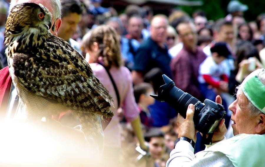 Grand-duc / Eagle owl