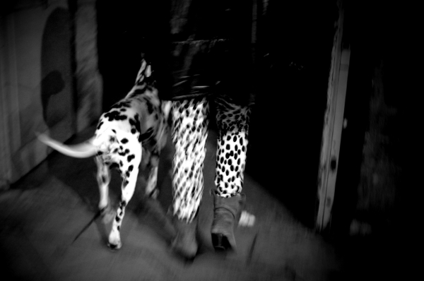 Dalmatiens