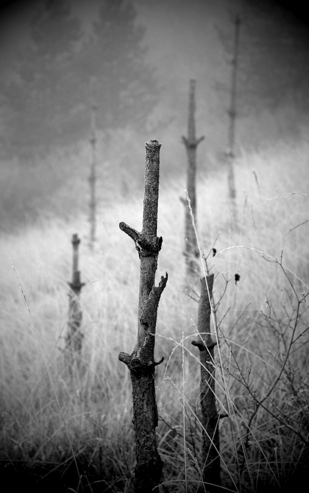 Brouillard / 1