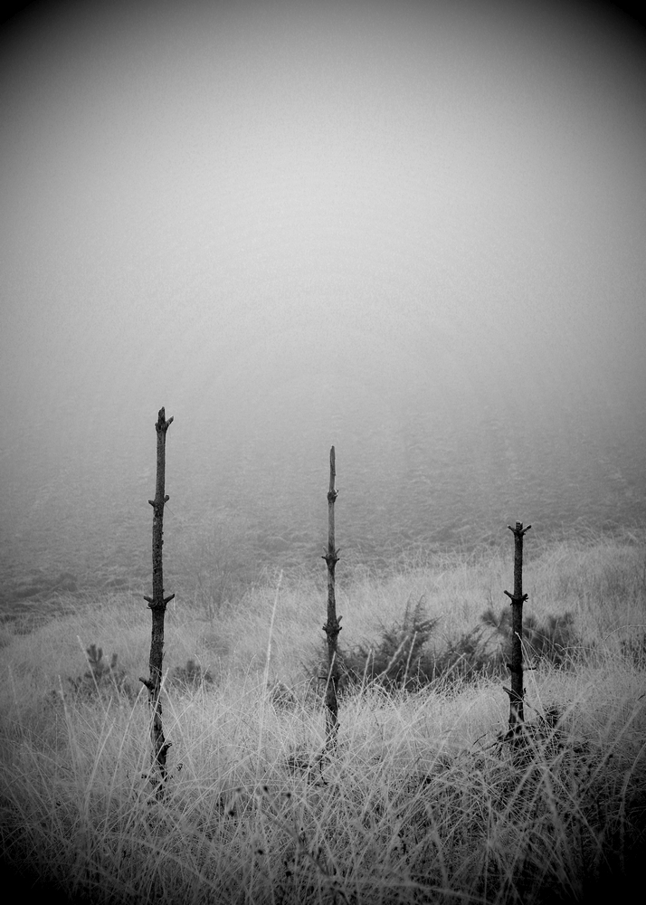 Brouillard / 2