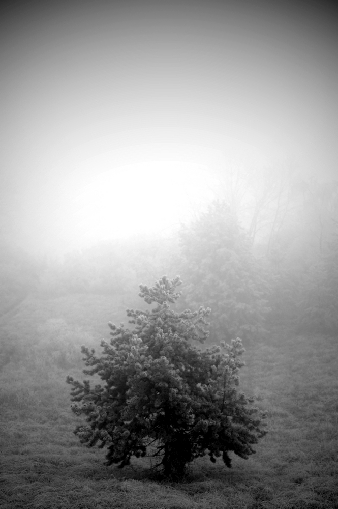 Brouillard / 6