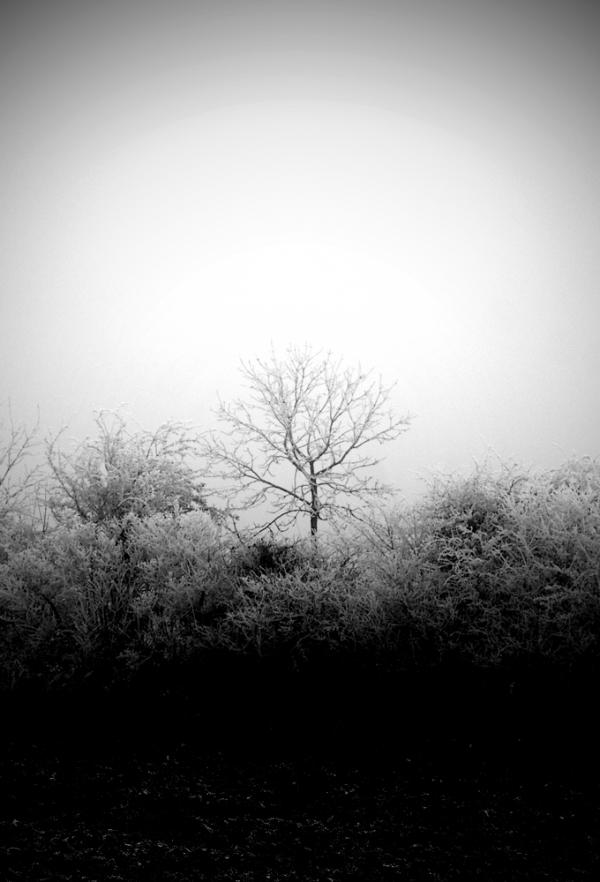 Brouillard / 10