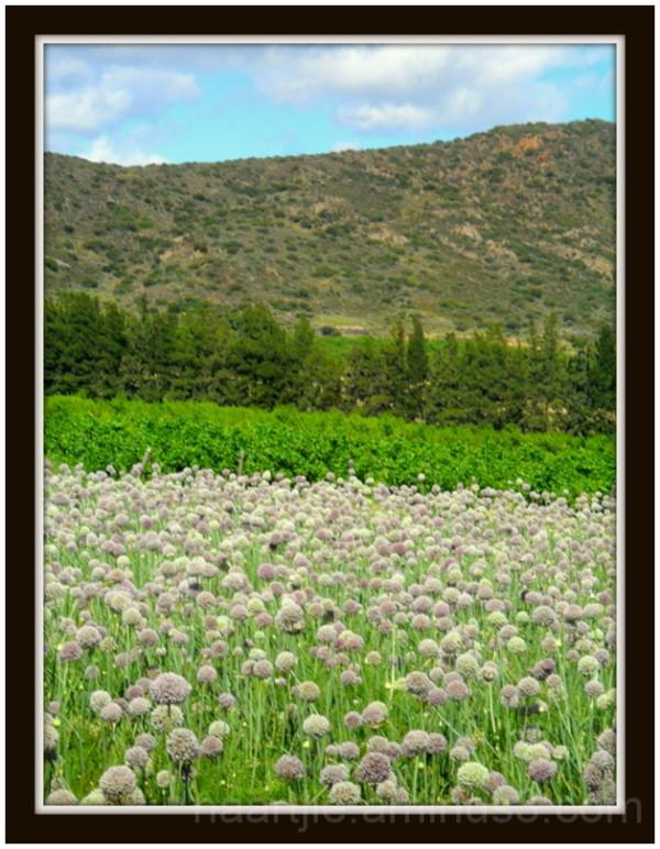 montague springs flowers