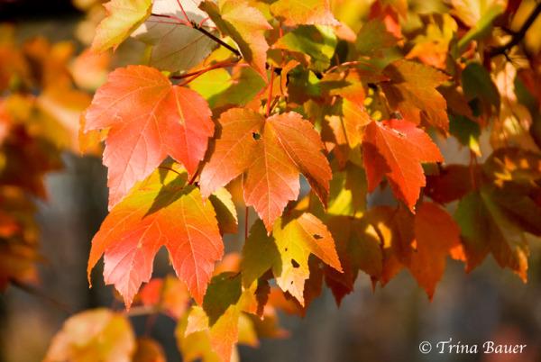 Fall's splendor