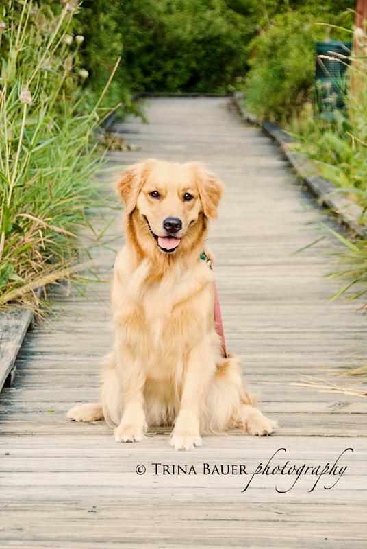 Izzy on the walk