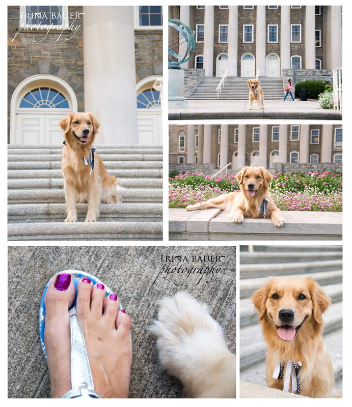 College bound pup?