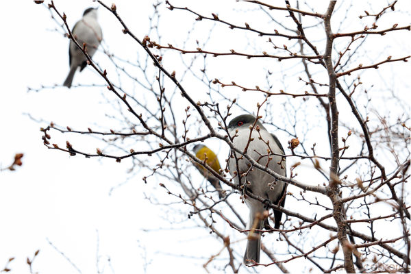 Birds on a tree at Calafate, Argentina