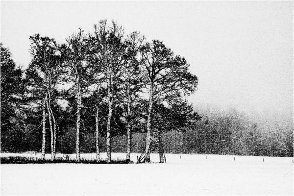 erster Schnee II
