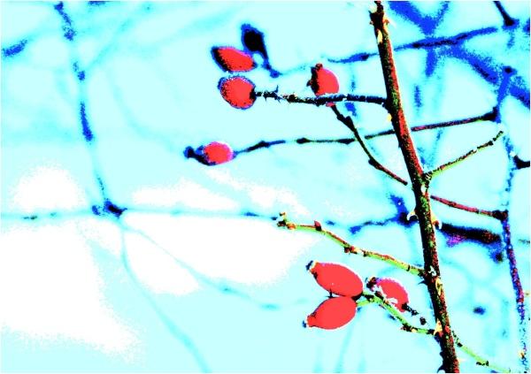 Winterfrüchte