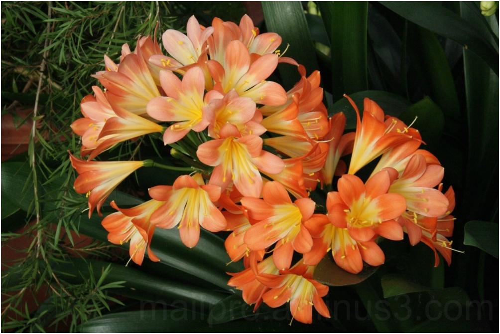 Blütenoffensive